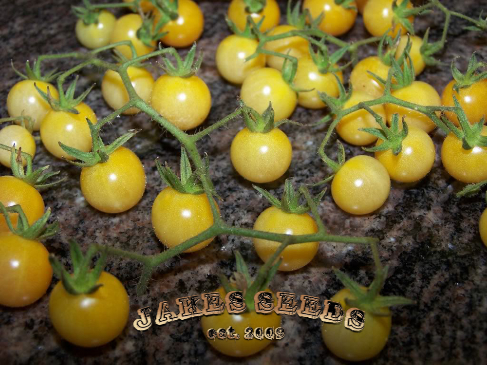 Little White Rabbit Heirloom Cherry Tomato Seeds - Jake's ...