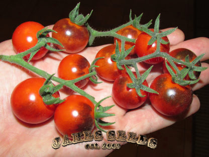 Blue Berries Tomato Seeds
