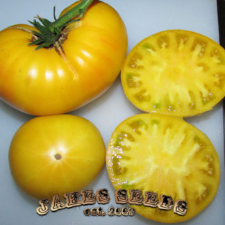 Candy's Old Yellow Heirloom Tomato Seeds