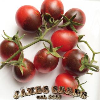 Fahrenheit Blues Tomato