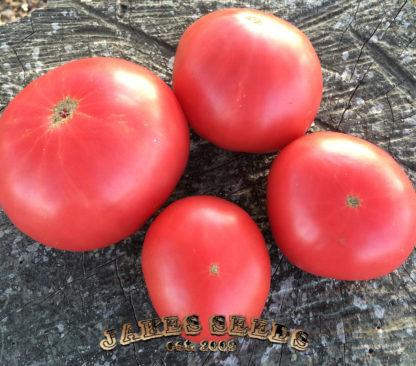 Beauty crack free heirloom tomato