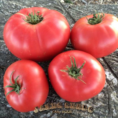 Pink Beauty Tomato