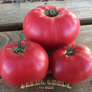Beauty Heirloom Tomato Seeds