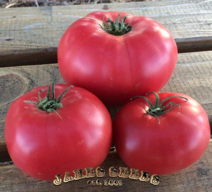 Beauty Heirloom Tomato Seeds