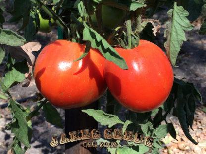 Porterhouse Tomato