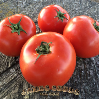 shady lady tomato