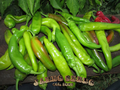 Big Jim Pepper Seeds
