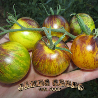 stripes of yore tomato