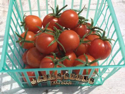 Koralik Cherry Tomato
