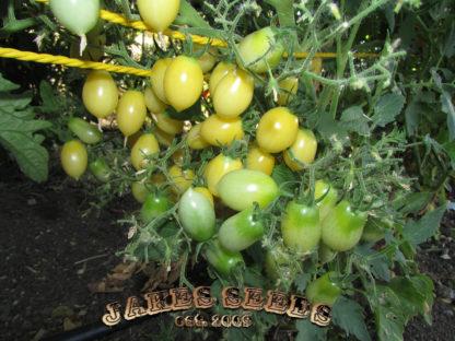 Barry's Crazy Cherry Tomato