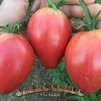 Giant Pink Oxheart Tomato Seeds