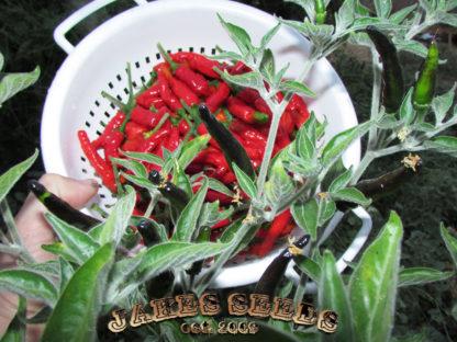 Black Cobra Pepper