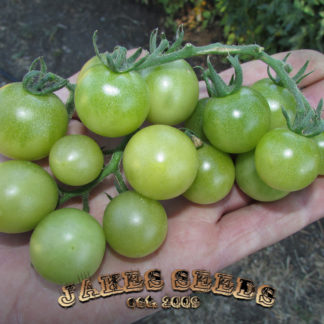 Green Doctors Cherry Tomato