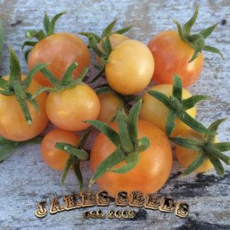 Napa Chardonnay Blush Cherry Tomato Seeds