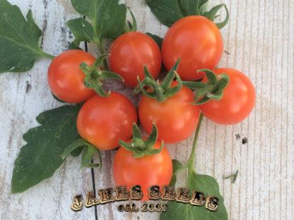 Peacevine Cherry Tomato