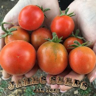 Chinese Velvet Heirloom Tomato