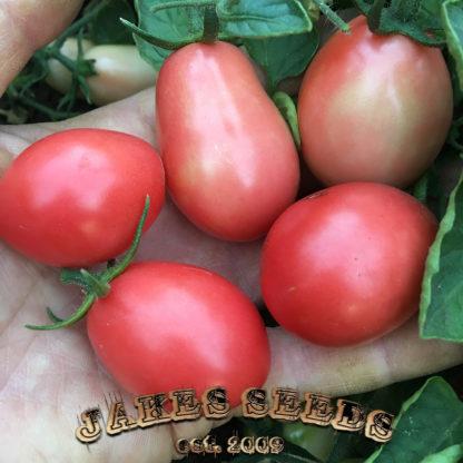 Thai Pink Egg Heirloom Tomato