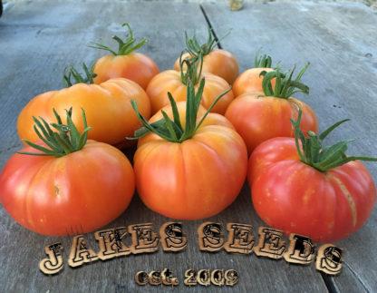 Oaxacan Jewel Tomato